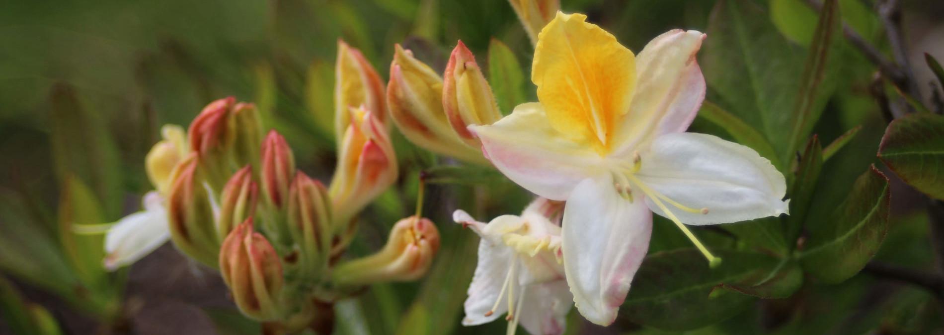 pheasant-gardens-03-675px